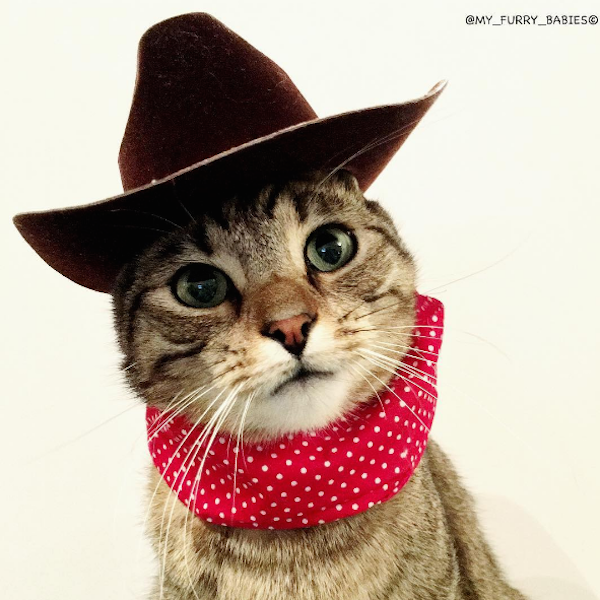 Howdy! Thought I'd wear my western wear to celebrate National Day of the Cowboy. #NationalDayoftheCowboy #CCLCaturday #Caturday #cats #cowboys