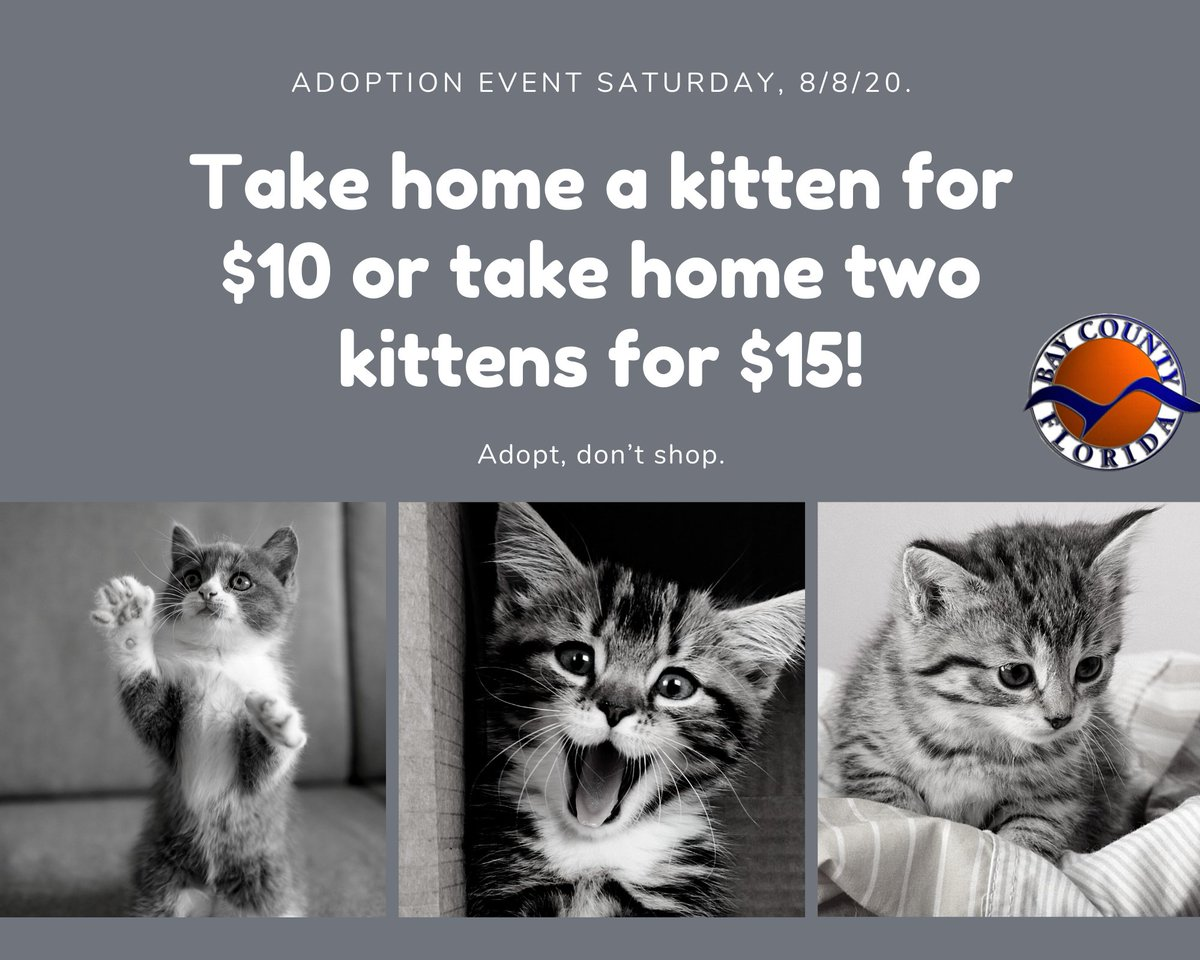 Bay County Animal Services is holding an adoption event this Saturday 8/8/20 between 10am-2pm with special rates on cats and kittens!   Cats and kittens can be adopted for $10 each or you can adopt two kittens for $15. Dogs will also be available for a $25 adoption fee.