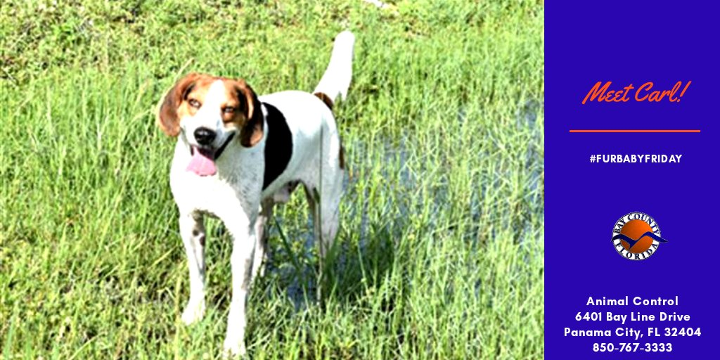 It's #FurbabyFriday and Carl wants to be your running buddy! He's an sweet little hound who is ready to help you stay (or get) active and healthy.