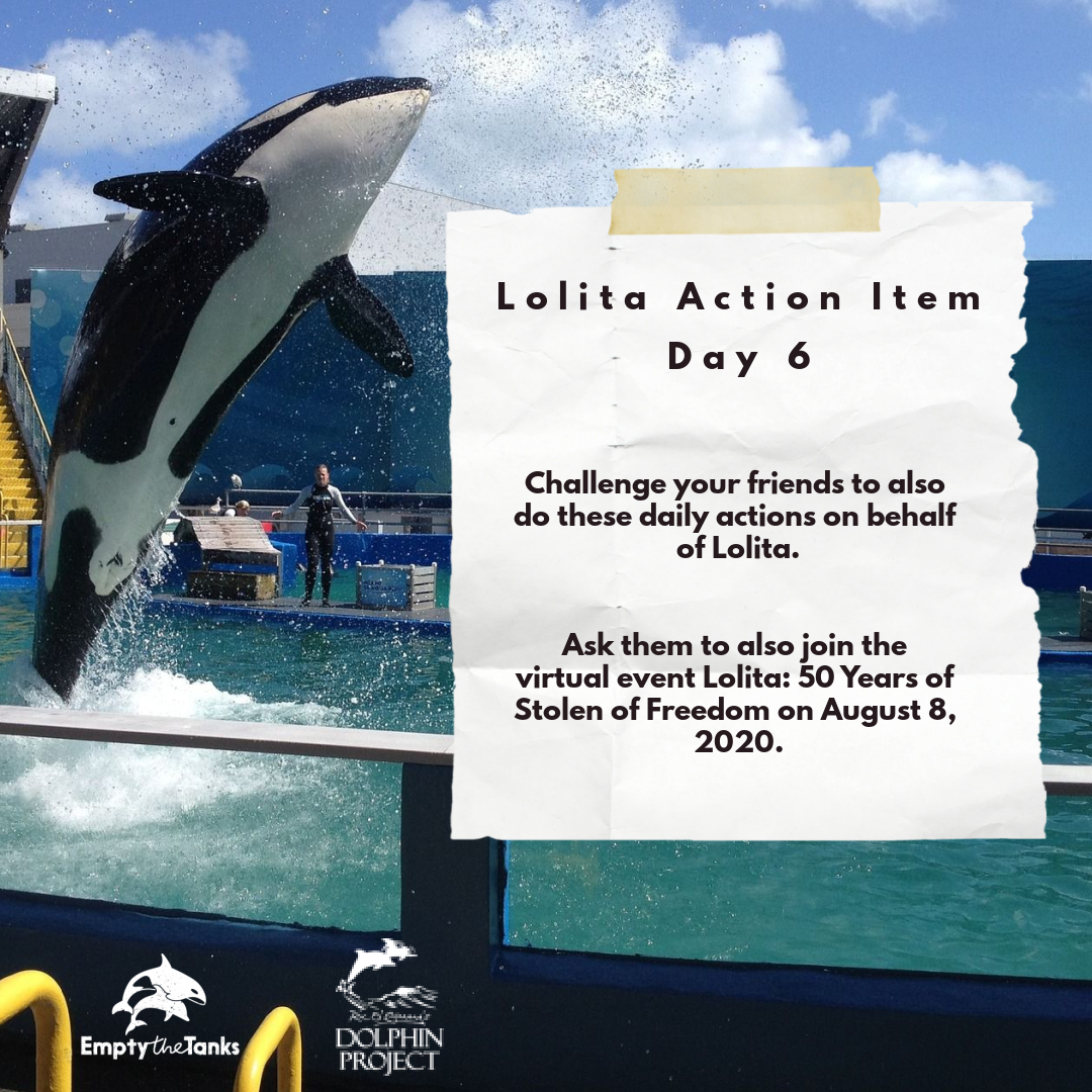 Action of the day: Challenge your friends to take a stand for Lolita! 🚨 The #50YearsOfStolenFreedom virtual event is tomorrow (August 8th)- the 50th anniversary of Lolita's capture. Find event details and action items at  #DolphinProject #RetireLolita