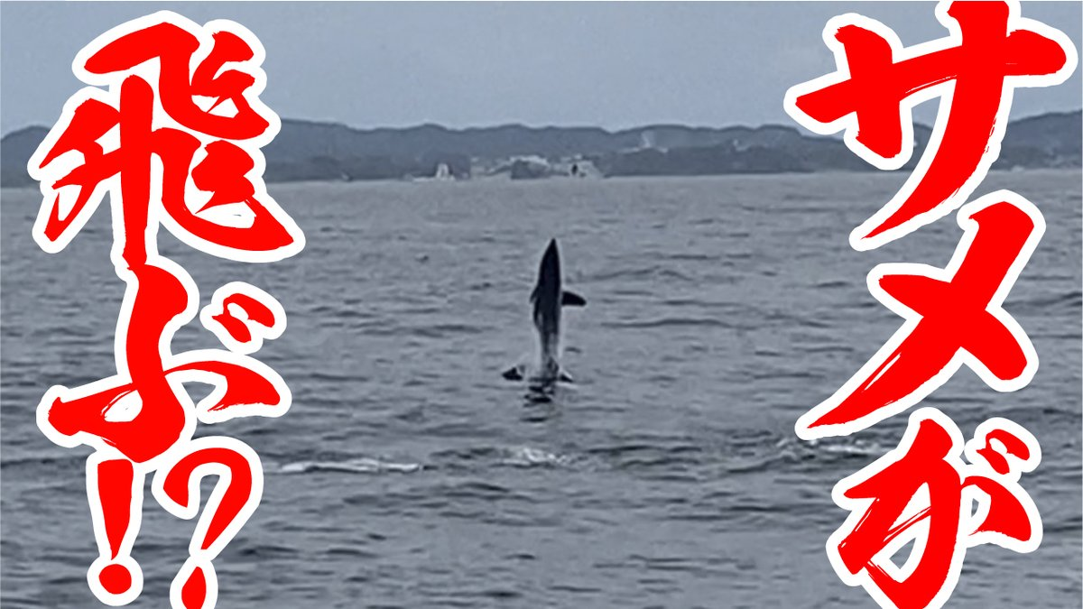 [お知らせ💫]  クラファン成功を祈って編集していた『サメが飛ぶ』動画、アップしましたっきー🐒 海のギャングと言われるサメとあっきー&そりとの格闘、とくとご覧あれ‼️     #林明寛 #反橋宗一郎 #釣り猿