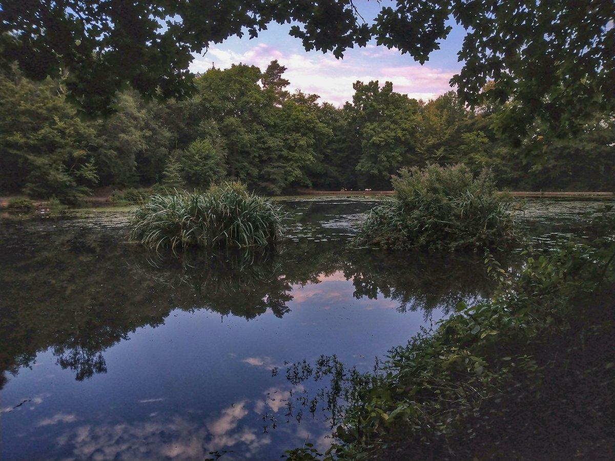 Caesars top pond is looking all nice n Tenchy this <b>Morning</b>.. @AnglersMail #tenchfishing #carp