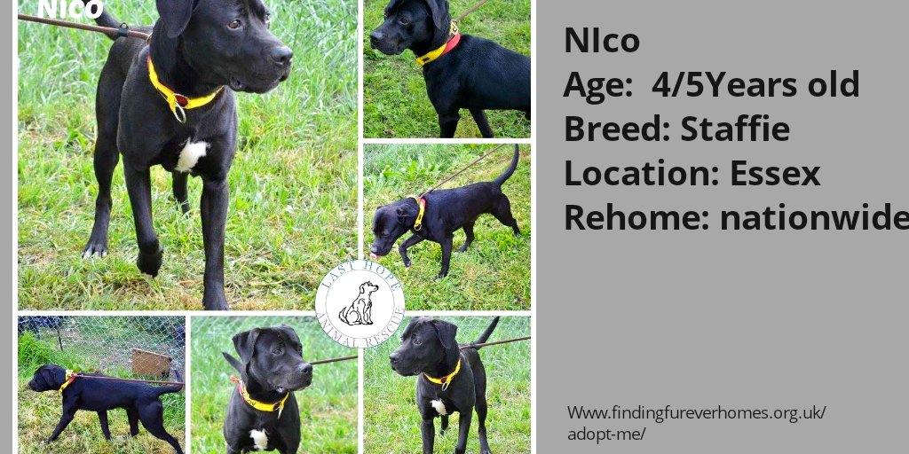 Please RT NICO'S details to help him find his furever home