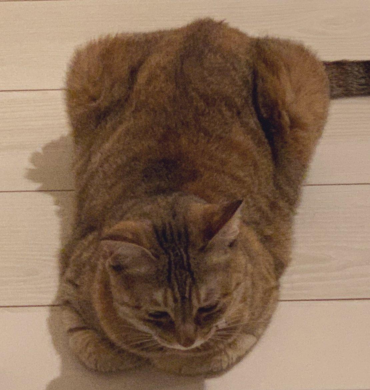 今日は猫の日なんですね。 しかし残念ながらうちに猫はいなくなってました。  うちのは、ミニ四駆です。