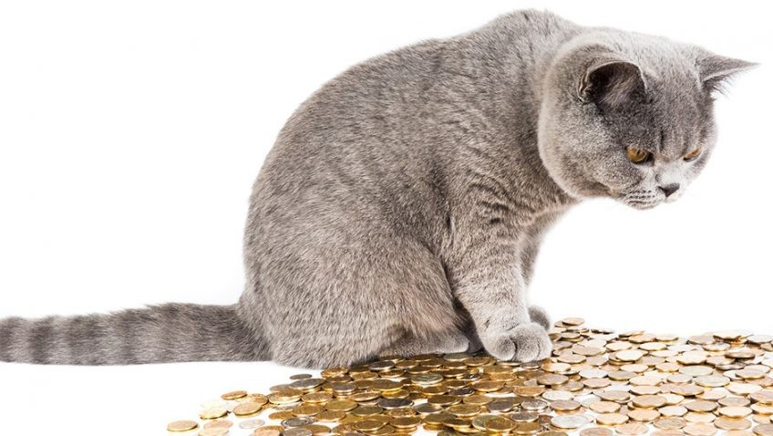 I know it's #NationalDollarDay and I've got no dollars. But money is money no matter what. #CCLCaturday #Caturday #cats #money #Dollars