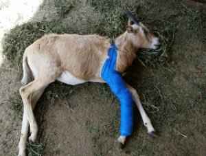 Live scene from Messi's injury.