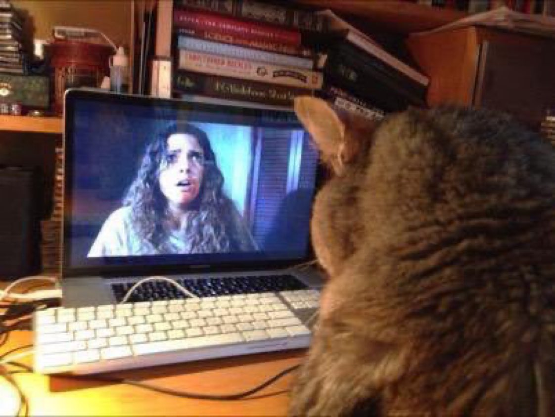 #InternationalCatDay 🐈 When your cat only wants to watch Hellraiser! 🔥 #horror