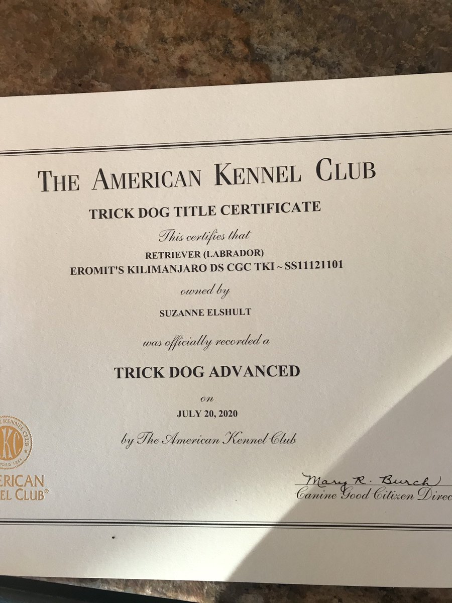 test Twitter Media - Kili is the proud owner of an Advanced Trick Dog Certificate today. #akctricks #dogtricks #dogobedience #lovemydog https://t.co/stRbZqR5Y1
