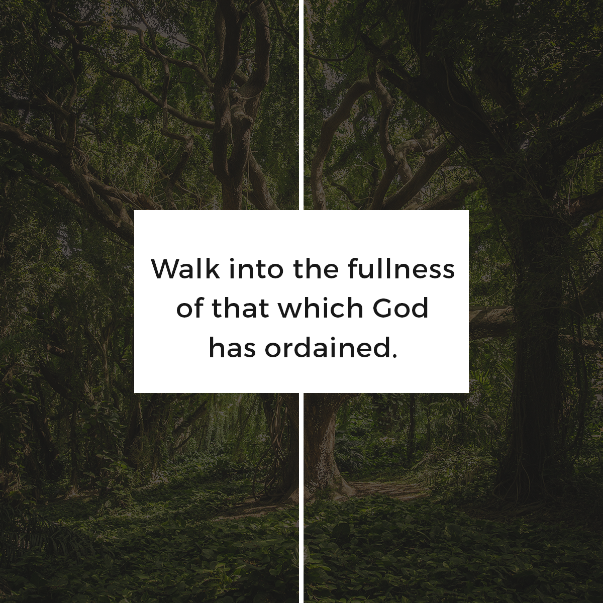 Rediscover your God-ordained purpose. Walk in the fullness for which He has created you! #ThursdayThoughts #Purpose