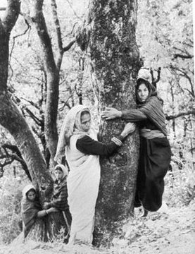 The Chipko Movement,1970s-Indian, mainly women activists who protected local forests from deforestation, viewed as a model for ecofeminist activism and many future environmental movements globally and the most significant 'tree huggers' in modern history #womensart