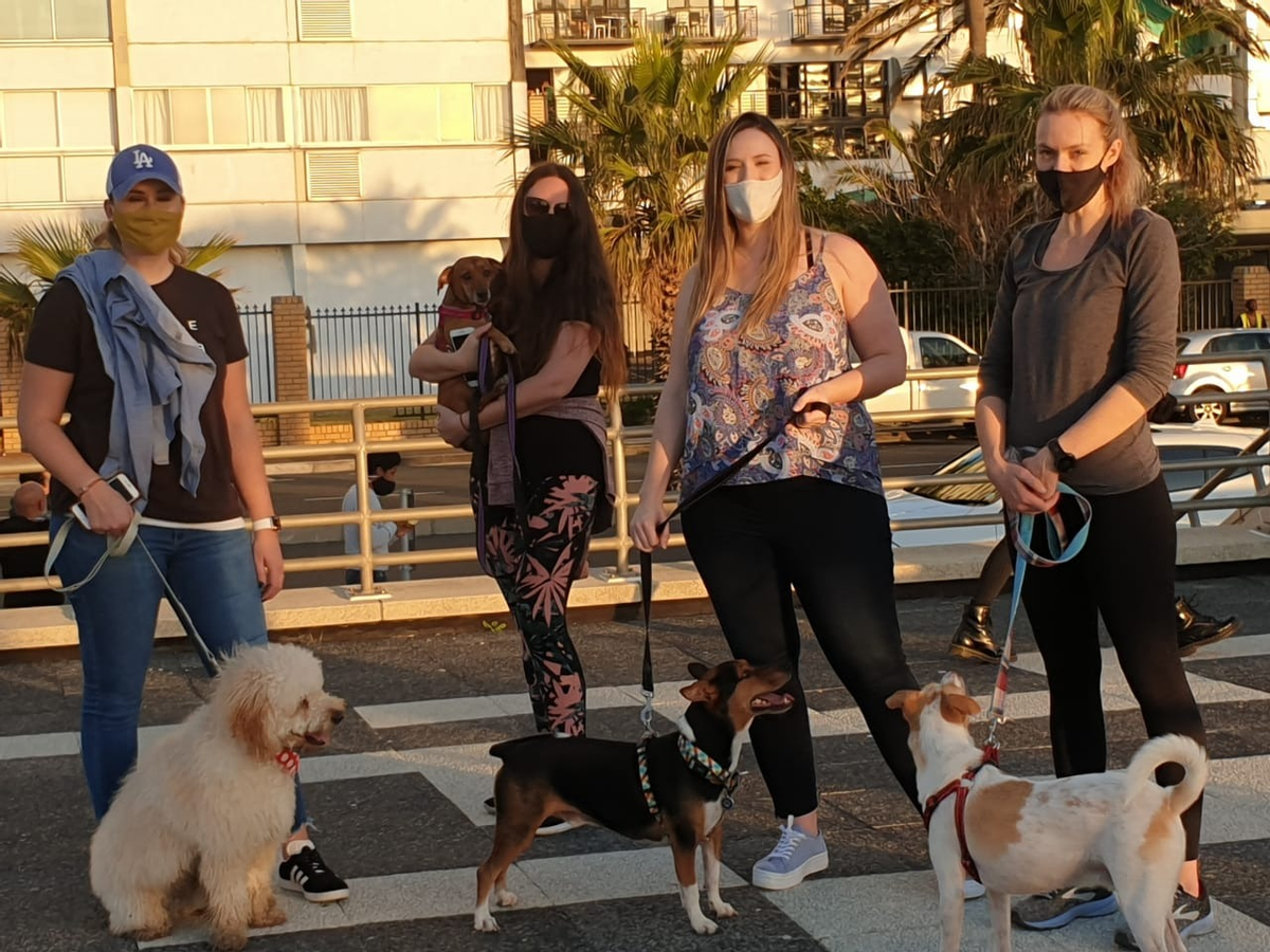 test Twitter Media - Our Cape Town team was able to have a great catch up recently while keeping socially distant, their dogs enjoyed the Sunset walk too!   #sociallydistant #wfh https://t.co/hvQhverdFD