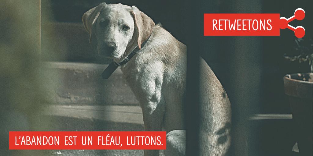 📢 1 retweet = 1€ reversé à la SPA 🐾 Objectif : 40000 partages ! 💪  Chaque été, en France, 60000 animaux sont abandonnés. Et les aires d'autoroute ne sont pas épargnées... 😢🐶 🐱🚗 Pour la 4ème année consécutive, @GroupeAPRR s'engage avec La SPA pour lutter contre ce fléau.