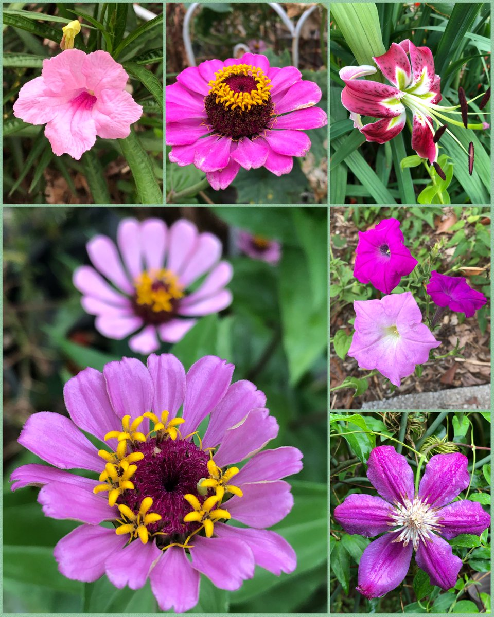 #sixonsaturday #gardening #August1st #summerflowers.This week a hurricane is coming,so here is my six before the storm 🌧🌧💨💦Please visit, read and enjoy the other entries on the SOS hashtag thanks to @cavershamjj for  the beautiful and interesting hashtag 😃