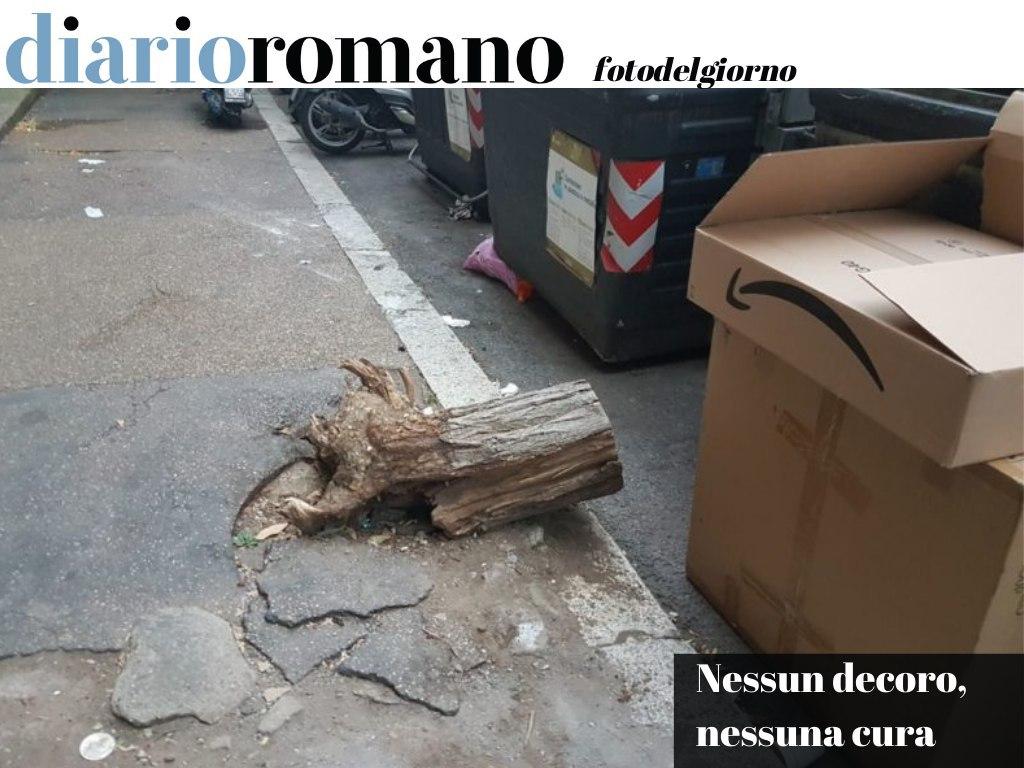 test Twitter Media - Un albero muore e viene segato. La radice e il marciapiede vengono abbandonati così dal Comune. Via Marchetti (II Mun)🤦🏻♂️ . #Roma #fotodelgiorno 📸 https://t.co/aUWHhUdBI0