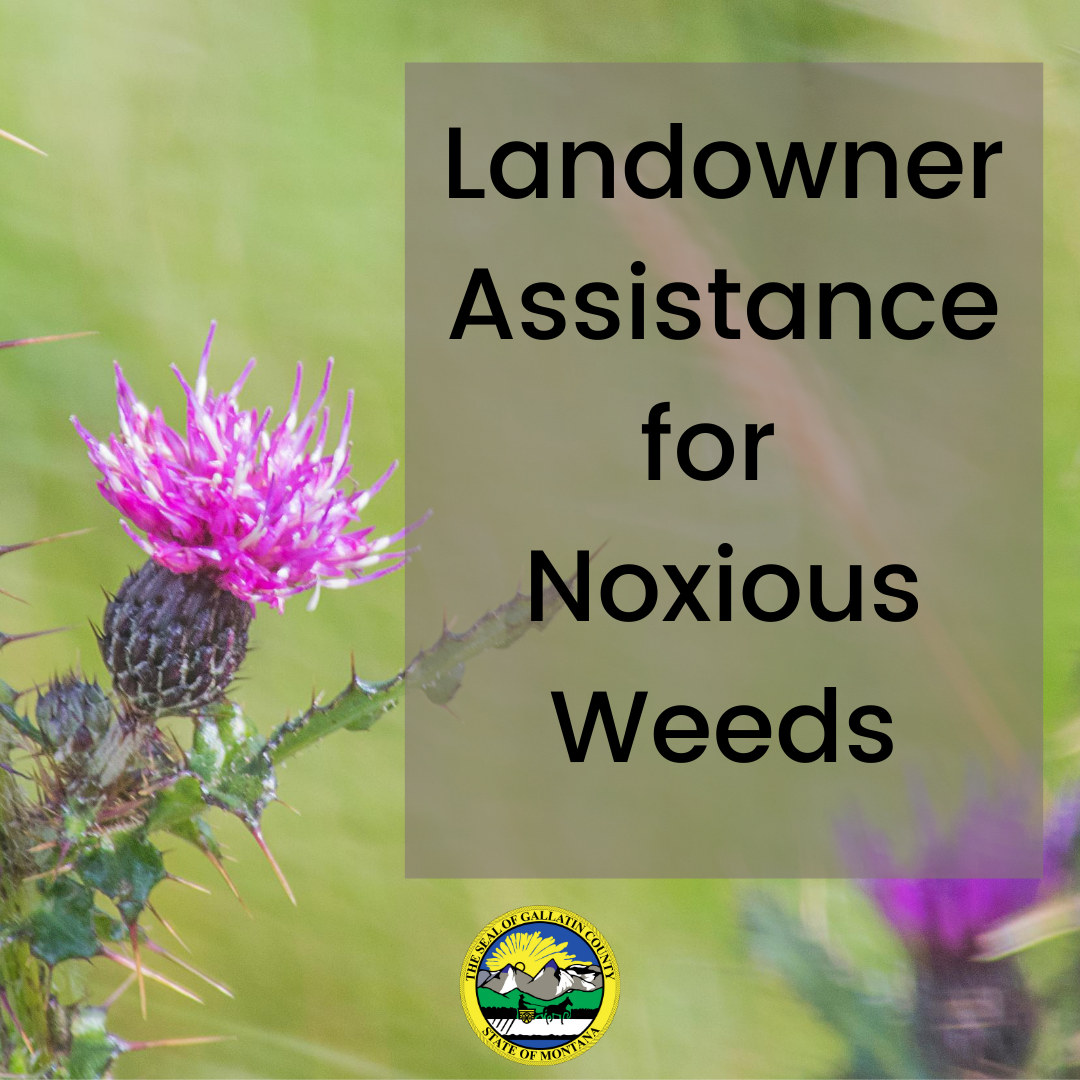 Gallatin County landowners! Need some help tackling a noxious weed problem? The Gallatin County Weed District is here to help!  Info on a variety of programs available to assist can be found here:   #gallatincountymt
