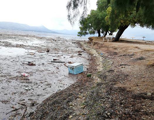 Έχουν παρασυρθεί κυψέλες στην Εύβοια και έφτασαν στην ακτή. Όποιος έχει χάσει μελίσσια ας επικοινωνήσει, έχουν κρατηθεί οι κωδικοί. (από fb)