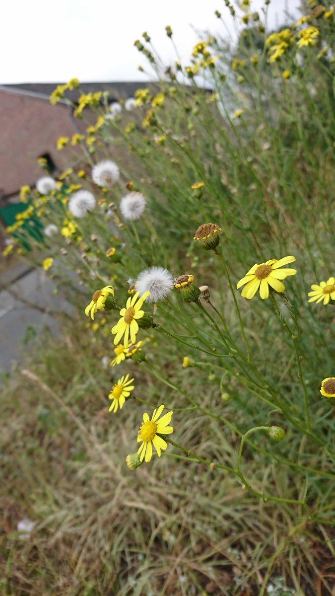 #naturelovers #natureismyhome #nicetime #GoodDay #Flowers #flowerpower
