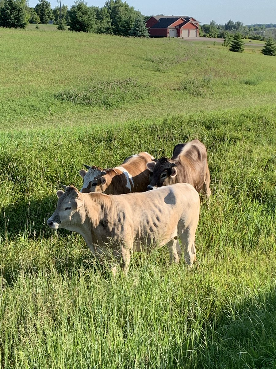 Are you missing any cattle?   We located these wandering around Holdingford yesterday.  Please call 251-4240 if you have any info.