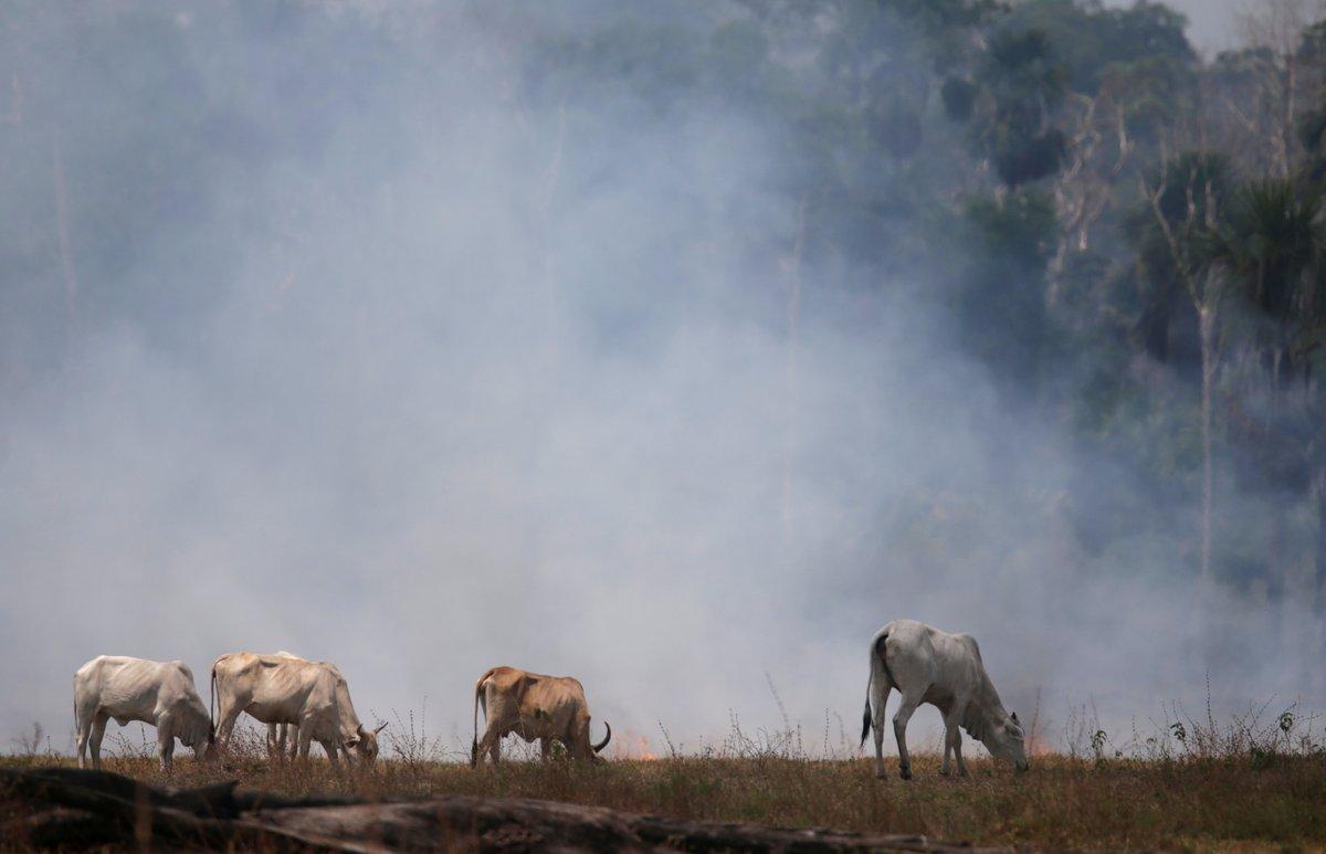 Indústrias do agro defendem que Brasil atenda exigências ambientais de países compradores  #G1