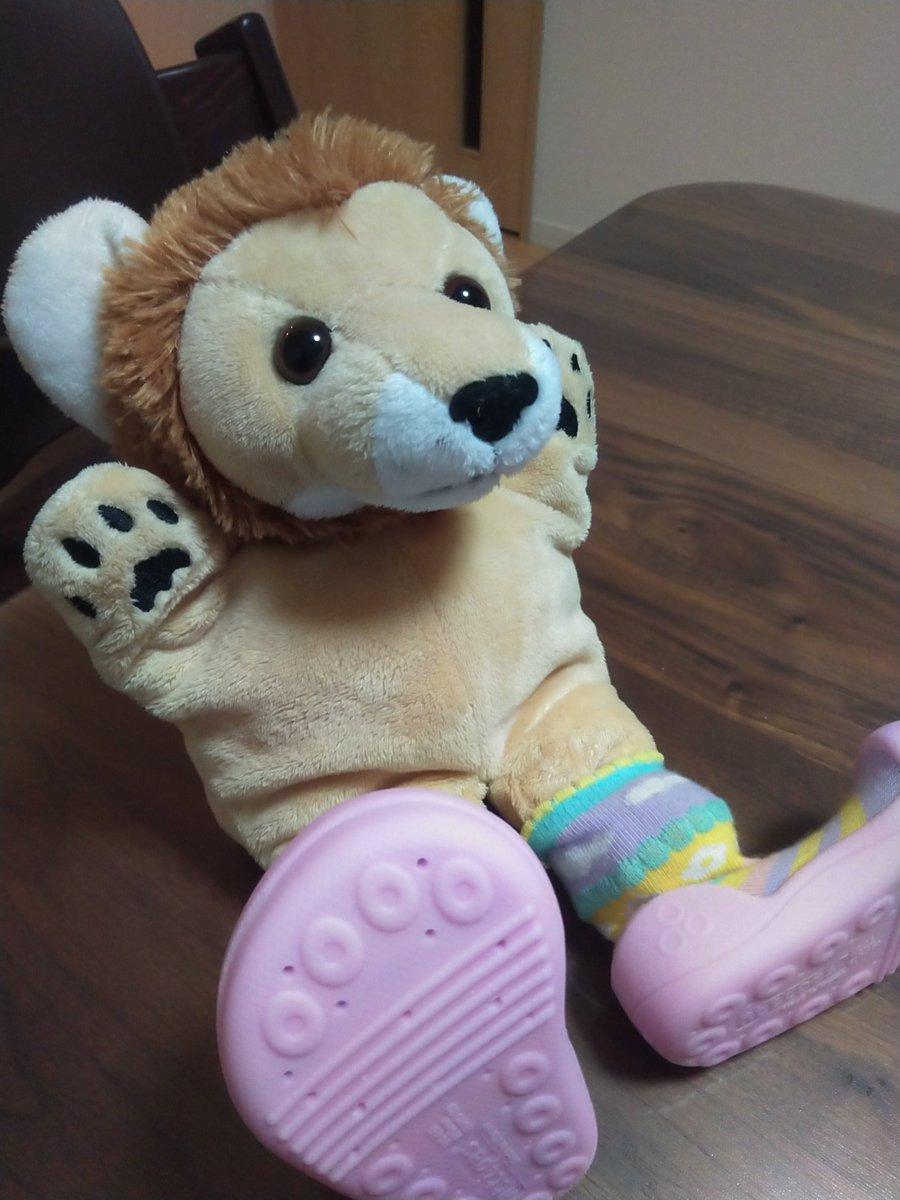 test ツイッターメディア - 衝動買いしたベビーチェアと一緒に買った靴下のような靴。 ファーストシューズの前の練習用靴。プレシューズ的なモノ。 娘に履かせると気になって脱ごうとする。 よく遊園地で片方だけ小さな靴が落ちてるのは自分で脱いじゃってるわけですね。 https://t.co/Eafy5GIP2N