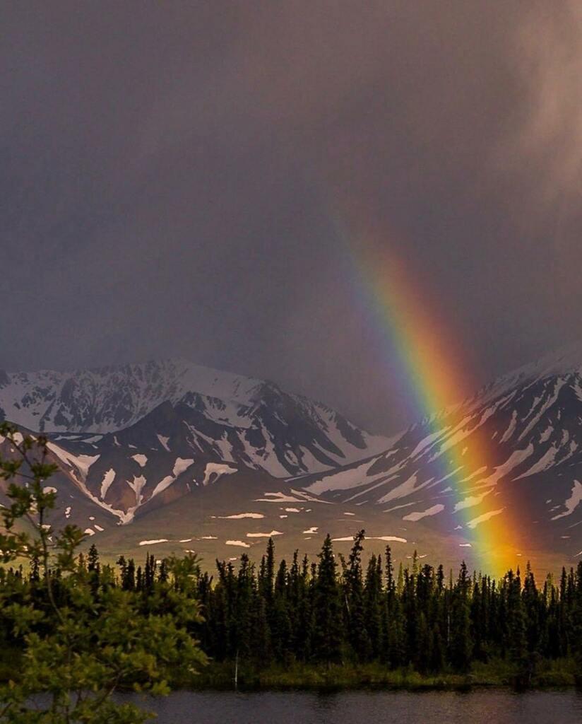 A radiant rainbow graces the moody landscape on the Denali Highway a few days ago @chrisirwinphotography  . . . .  #interioralaska #denalihighway  #fairbanksalaska #alaska  #explorefairbanks #fairbanks #majestic #alaskadream #fairbanksalaska #alaskaroadtrip #summerday #arcti…