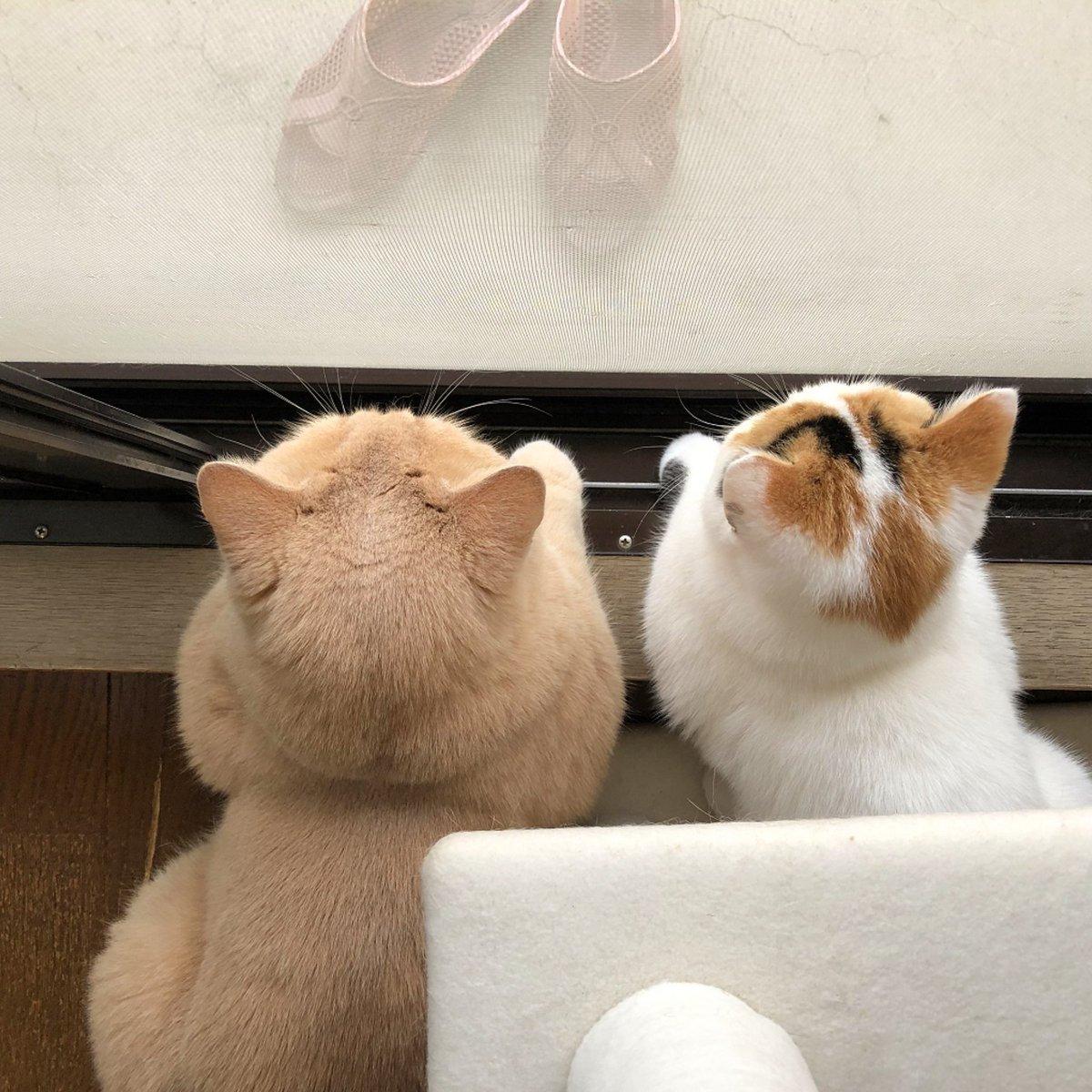 猫の後頭部ってなんでこんなに可愛いんだろ.‥