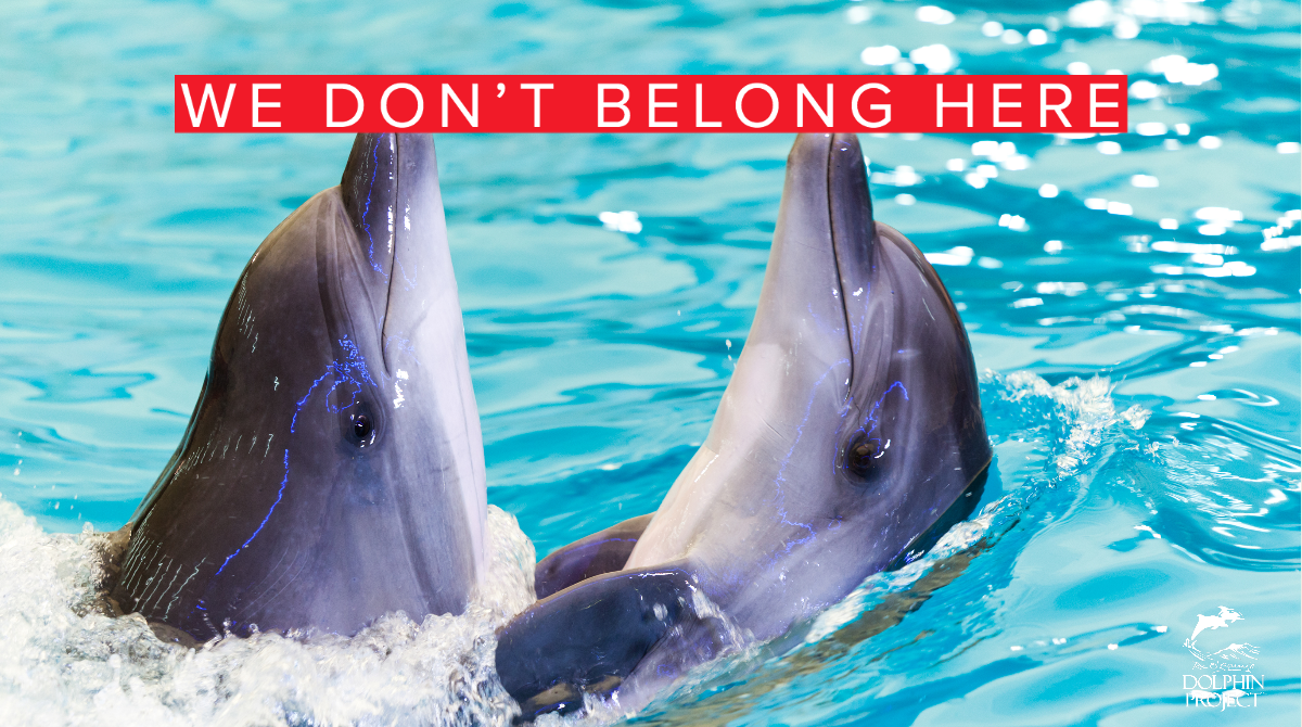 Dolphins have large, complex brains, are self-aware and develop close relationships with family and other pod members. Everything we have learned from them tells us they don't belong in concrete tanks, performing tricks for our amusement. Learn more:
