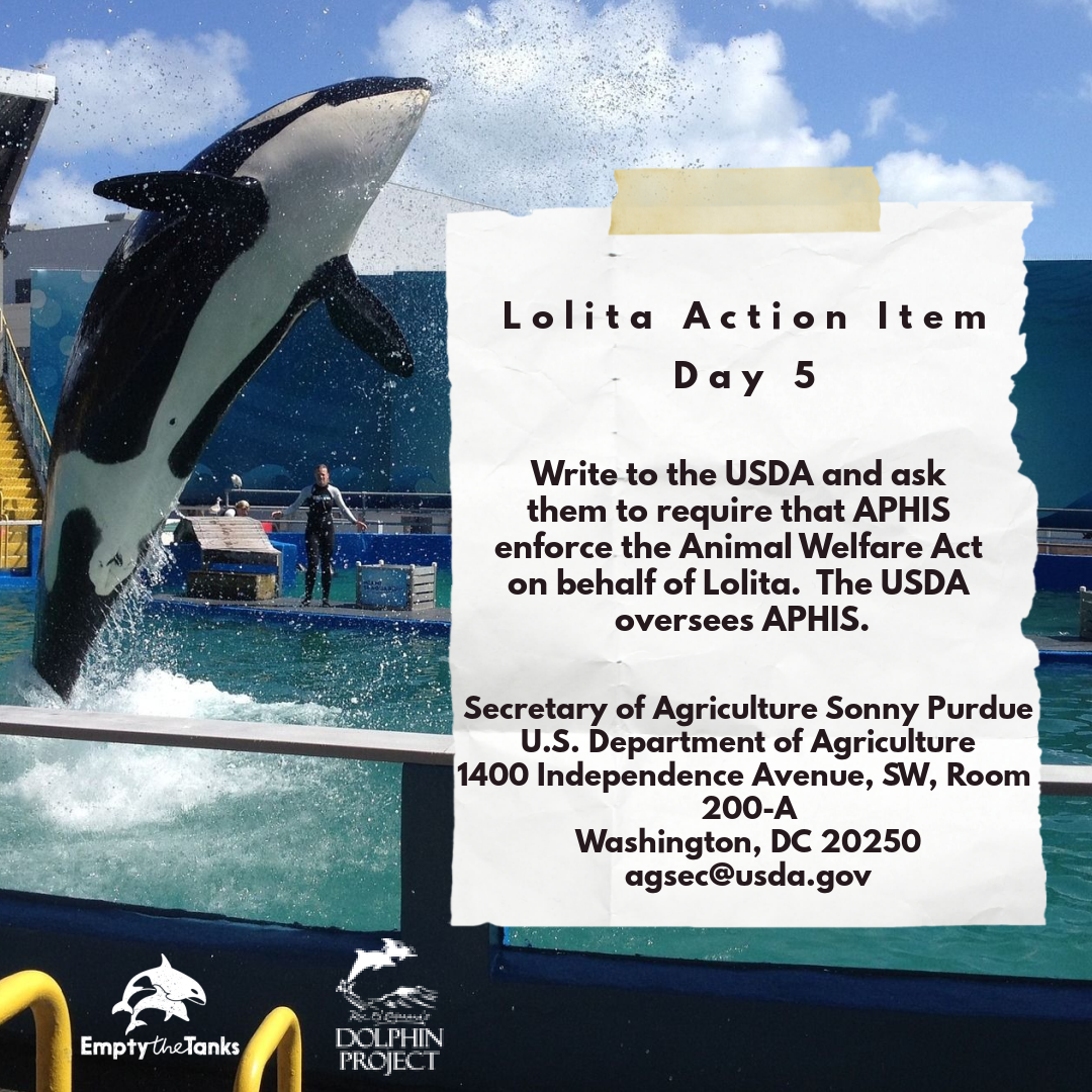 Take action each day leading up to the #50YearsOfStolenFreedom virtual event on Aug. 8th! Today, write to the USDA and ask them to require that APHIS enforce the Animal Welfare Act on behalf of Lolita! Find event details at  #DolphinProject #RetireLolita