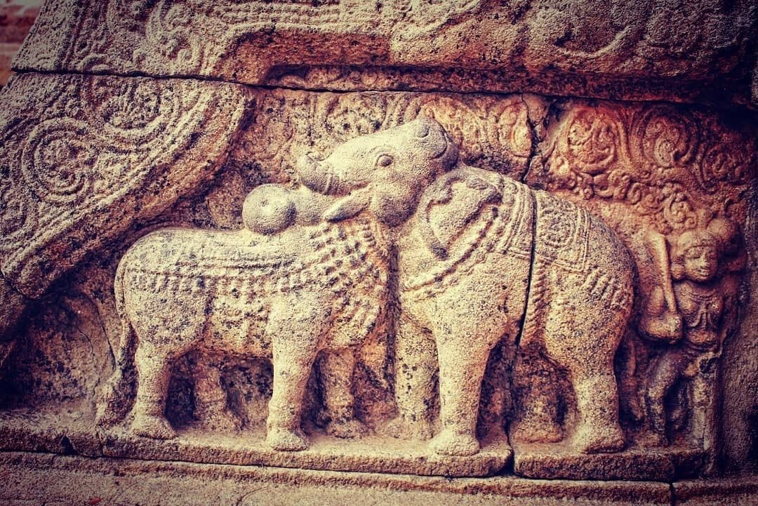 One of the world`s oldest optical illusions in art..! An elephant and a bull sharing a common head. This 900 year old exquisite bas relief is part of the Airavatesvara Temple and is a shining example of Chola architecture. Magnificent..!
