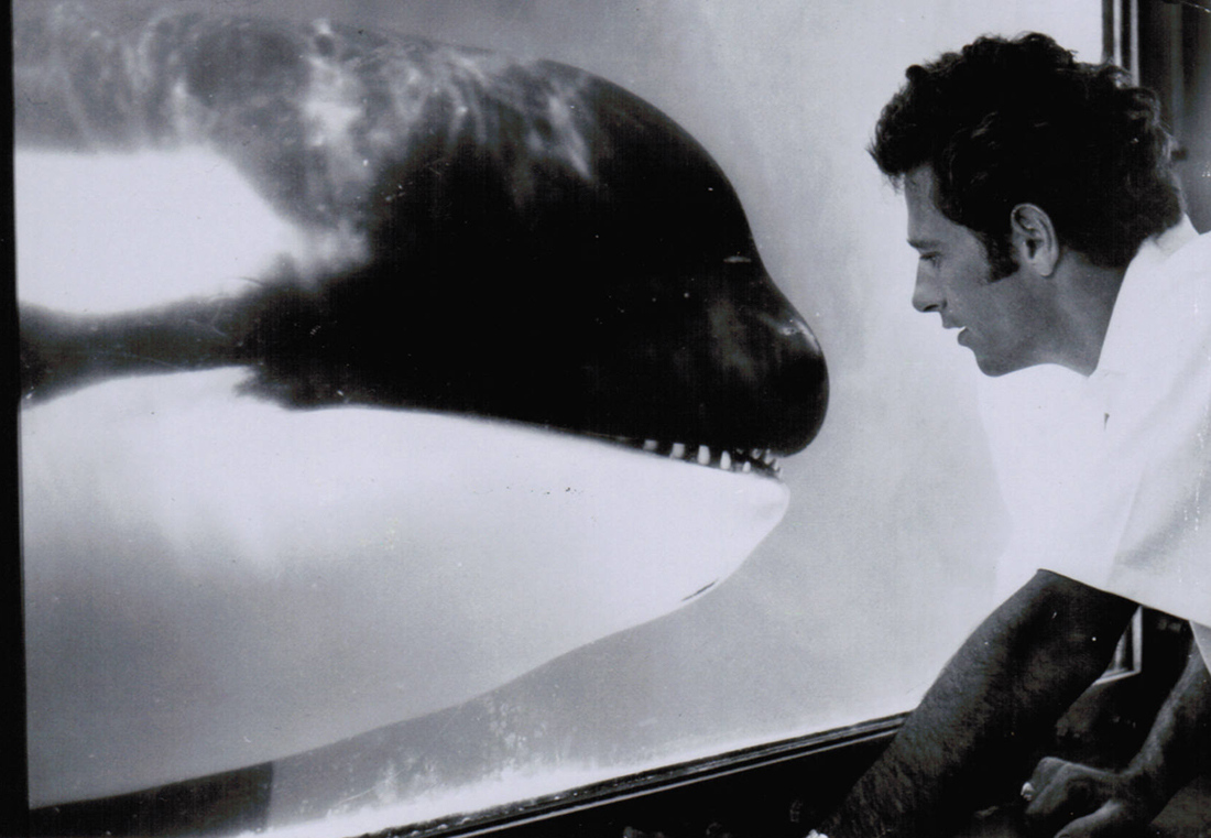 Lolita once shared a tank with another orca named Hugo. Learn more about Hugo's tragic story:  #CaptivityKills #DolphinProject