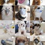 200808犬にマスクをさせるのは危険危ない