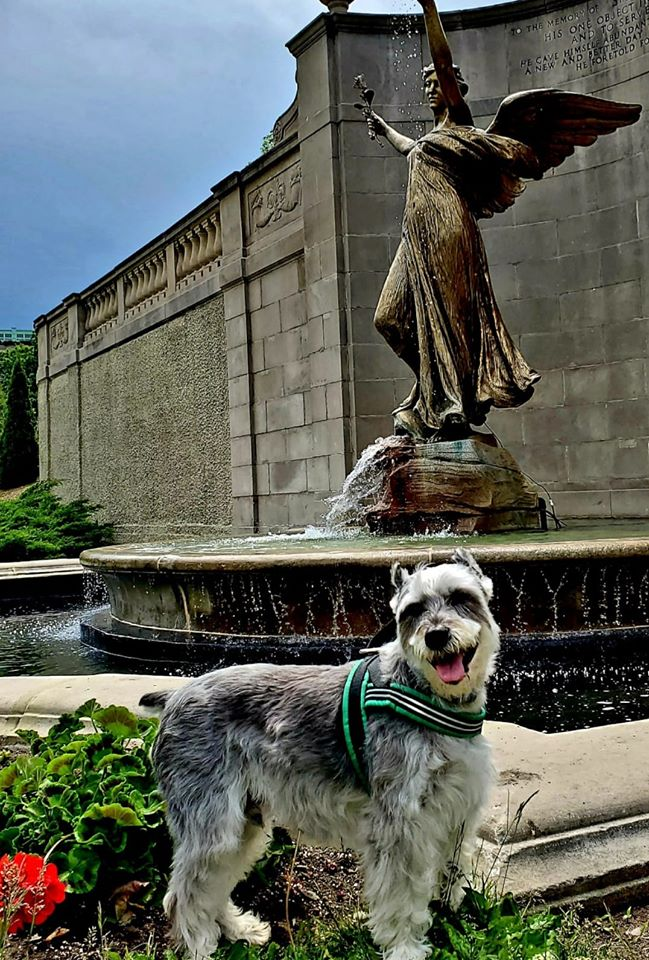 Our Saratoga Dog of the Week Hutch loves going for walks in Congress Park! Find pet friendly lodging, parks, restaurants and more in Saratoga here: