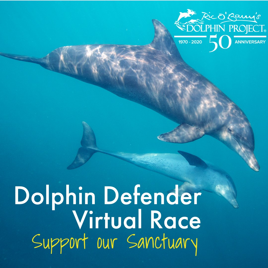 Run, walk, bike, or swim to help support our Umah Lumba Dolphin Sanctuary in Bali! 🐬🏃🏽♀️🚴🏻♂️🏊🏾♀️ Registration is now OPEN for our 5th annual virtual race at:  #DolphinProject #LetsProtectDolphinsTogether