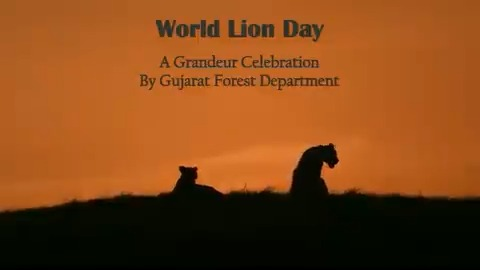 On #worldlionday2020, @dcfsasangir released a video which nicely covers #WorldLionDay celebrations organised last year to create awareness about #AsiaticLions amongst people of #Gujarat. @GujForestDept @drrajivguptaias @CMOGuj @DCF_Junagadh @DCF_GirWest