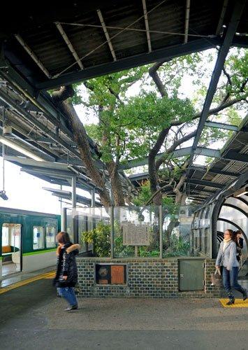 test ツイッターメディア - その1 大坂京阪電車の「萱島駅」のド真ん中に生えてるクスノキ。元々この駅を建設する際に処理される予定だったのだが、計画した翌日に重機を運転する人が亡くなり、引継ぎで担当した方も亡くなり、その後もこの木に関係した人が亡くなったため、このように残されているらしい。詳しい真相は不明。 https://t.co/zCjKPBsOXg