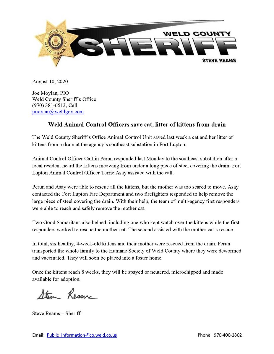 WCSO animal control officers last week saved a cat and her litter of kittens from a drain at the southeast substation. Details in the release.