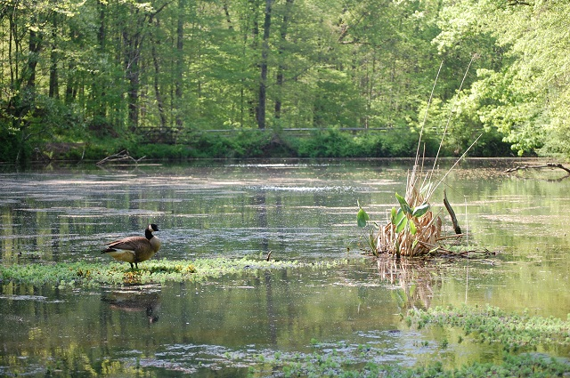 Join a Hidden Pond Nature Center naturalist on Aug. 13 for a virtual program about the importance of keeping streams and creeks healthy. Learn the role bugs play in gauging a stream's health. Program for all ages is from 1 to 2 p.m. Cost $10.