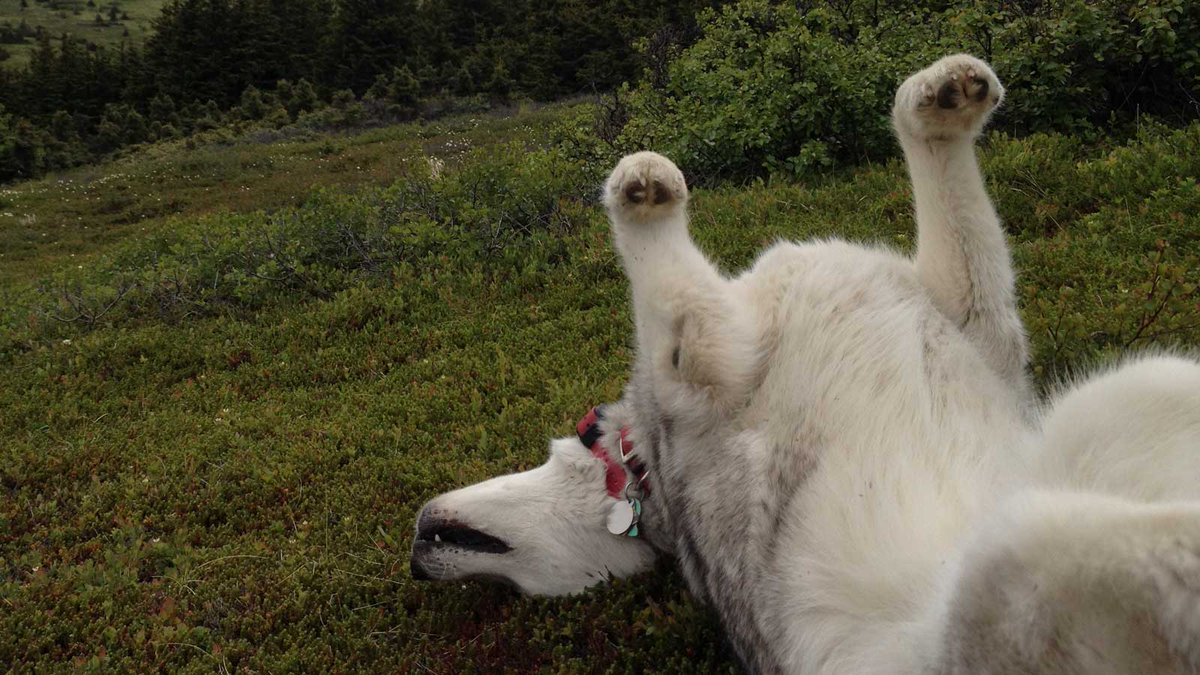 What day is #spoilyourdogday on the @TongassNF and @ChugachForestAK ? Today! Like every other day in #AlaskaNationalForests #dogs #cats @ForestService @NationalForests #Alaska