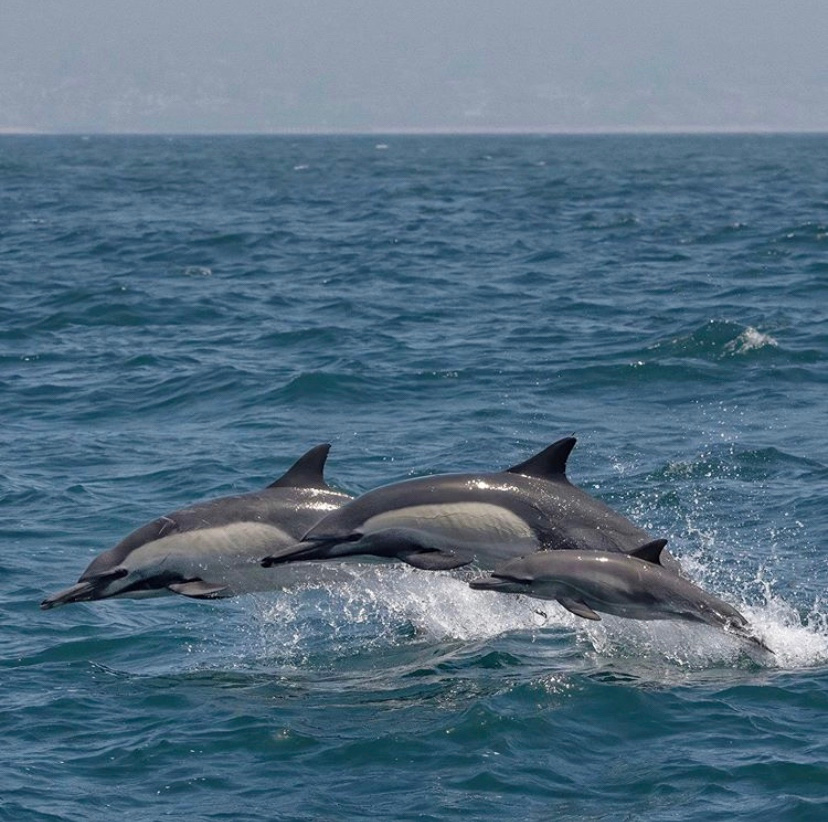 """Dolphin_Project: 🐬 If you're in need of some quiet time, join us for a quick """"swim"""" with wild dolphins in virtual reality! Go to    Photo by Loriannah H. #DolphinProject #KeepThemWild"""