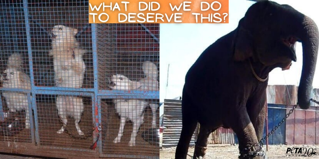 Animals in circuses suffer immense mental and physical harassment, making them want to run away from circuses.  🎪❌🐴🐘🐪🐶🐯🦜  Contribute towards their well-being:    #SayNoToAnimalCircuses #NotOursForEntertainment