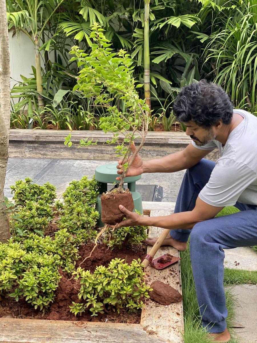 Actor #Vijay take on  #GreenIndiaChallenge from #MaheshBabu.. @MPsantoshtrs #ThalapathyVijay
