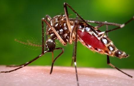 Take precautions against West Nile virus! #Fightthebite