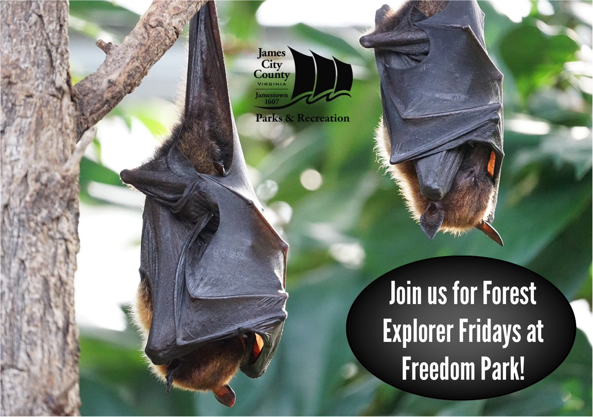Join us Friday, Aug. 21, 5:30-7 p.m. at Freedom Park Interpretive Center for Forest Explorer Fridays – this month's topic is Bats! For all ages; children must be accompanied by an adult. No registration required, FREE to attend. 757-259-4022,  #jccparksrec