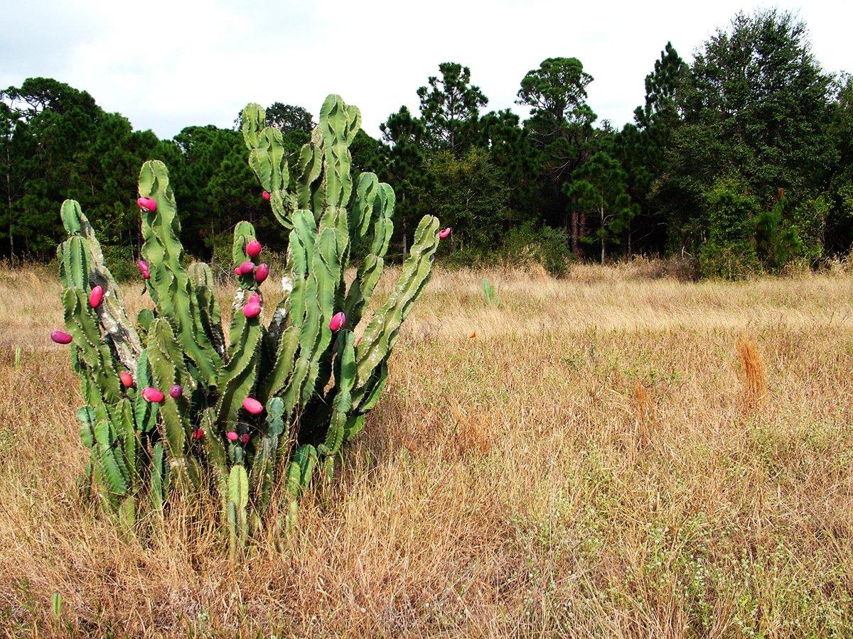 Good morning from #BrowardParks. Remember to cactus what you preach. #MiramarPineland in @CityofMiramar
