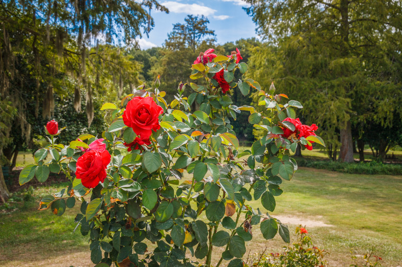 Small town spotlight: Get to know South Carolina's Garden City.  #DiscoverSC