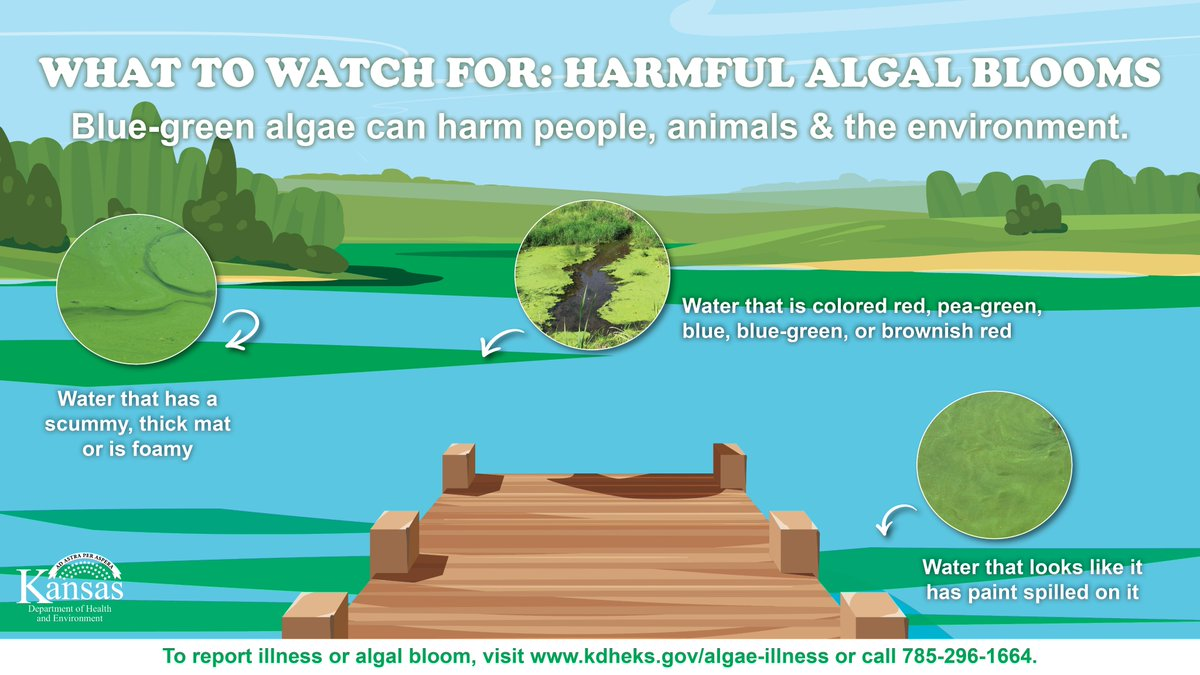 Spending time at a Kansas lake this weekend? See if your lake is on the list of blue-green algae advisories:  #HarmfulAlgalBlooms