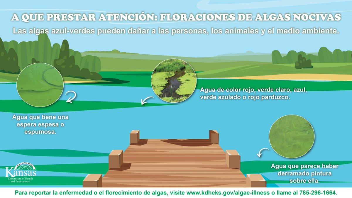 ¿Pasar tiempo en un lago de Kansas este fin de semana? Tenga en cuenta las algas verdeazuladas, que pueden ser perjudiciales para las personas, los animales y el medio ambiente.