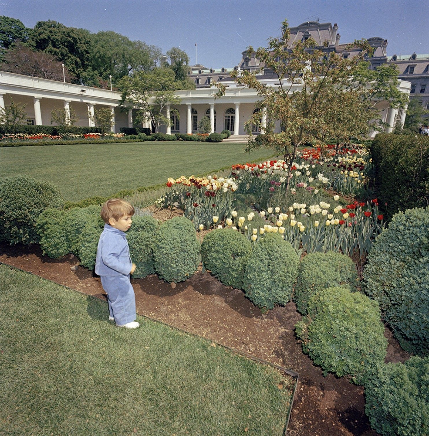@JoJoFromJerz @brookselaine70 @BeschlossDC @marycjordan Jackie Kennedy redid the rose garden and planted the trees that were removed. I am incensed that before they are going to be leaving, Melania thought it appropriate to remove Jackie Kennedy's garden. This, of course, after removing  Michele Obama's garden. Erasing history. https://t.co/VObVnZjE2f