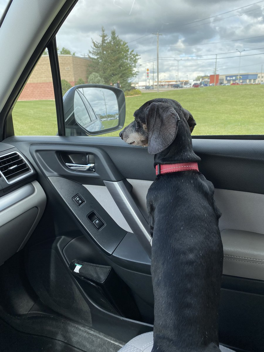 test Twitter Media - A day and a dog filled with anticipation! A great first day for this student. https://t.co/0w0L2jePaf