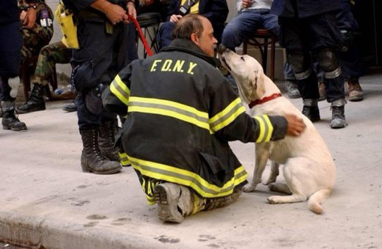 Often forgotten on this day are the over 300 search and rescue good boys and girls. Please remember all heroes and victims of 9/11.   Dogs, bruh...🌎❤️🇺🇸